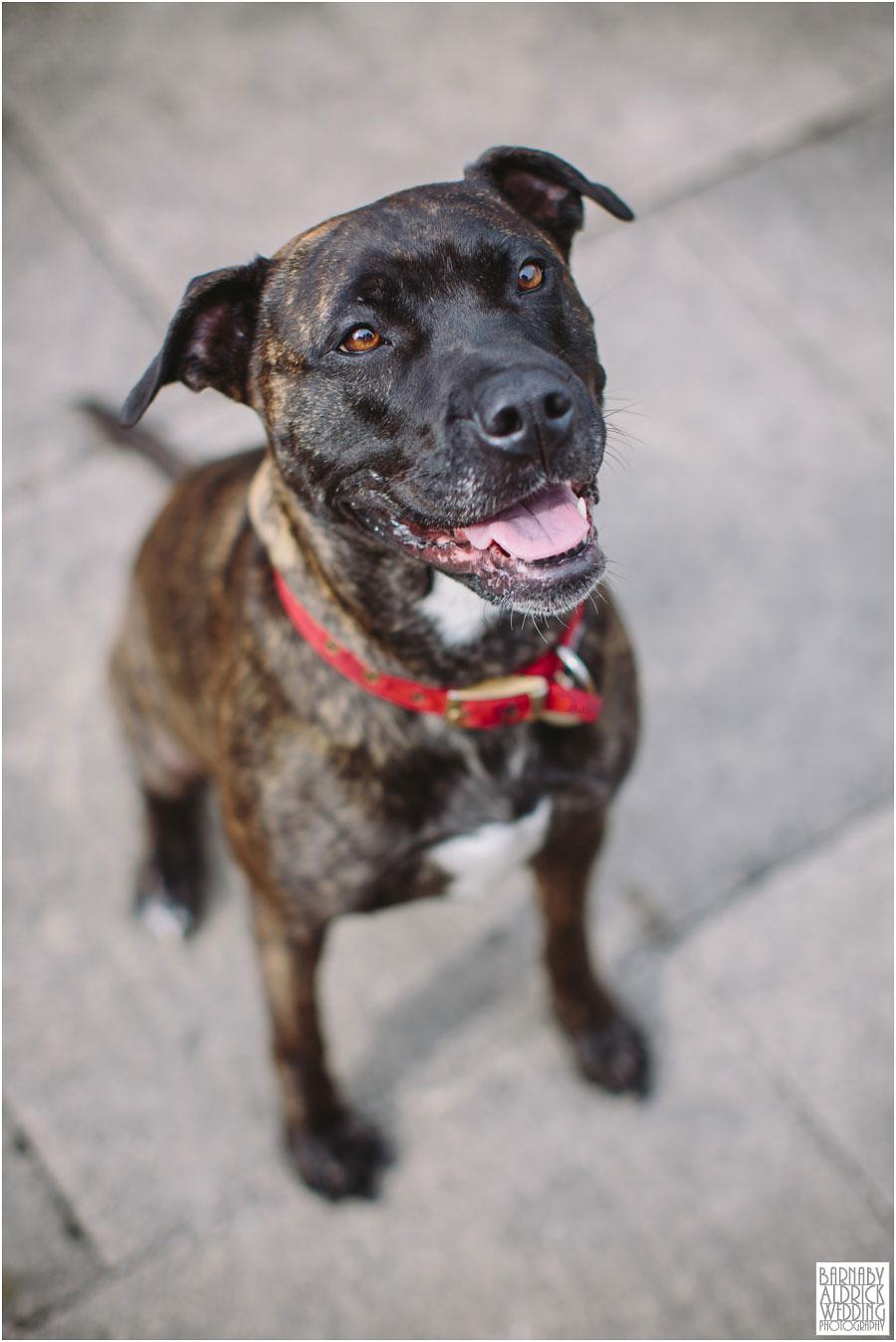 Yorkshire Rose Dog Rescue 005.jpg