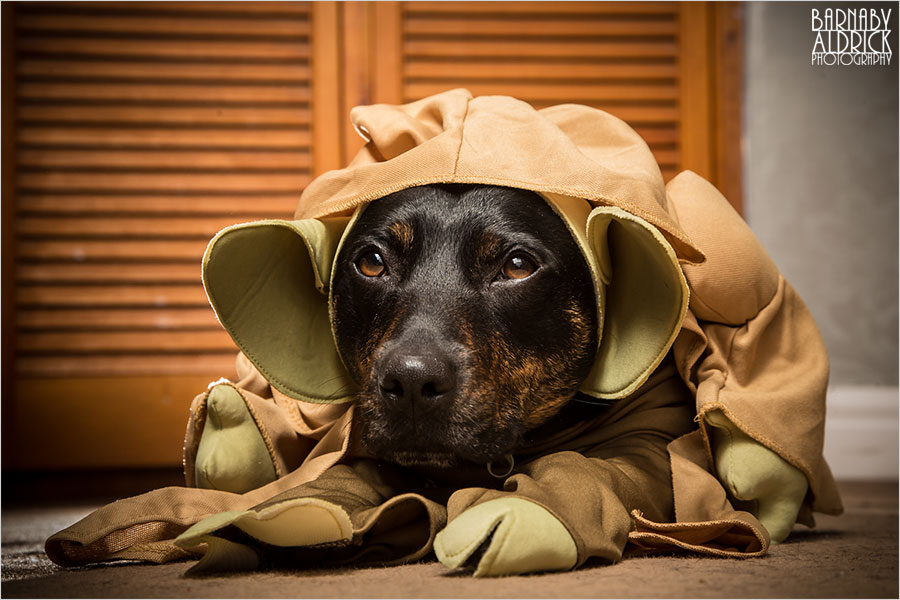Yoda Dog outfit, Star Wars Pet Costume