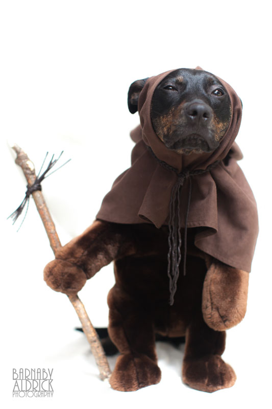 Ewok Star Wars Dog outfit, Star Wars Pet Costume