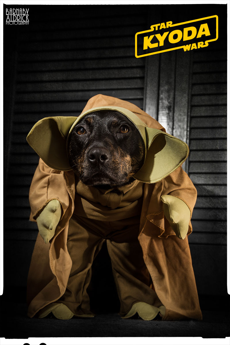 Yoda Star Wars Dog Fancy Dress, Star Wars Pet Costume
