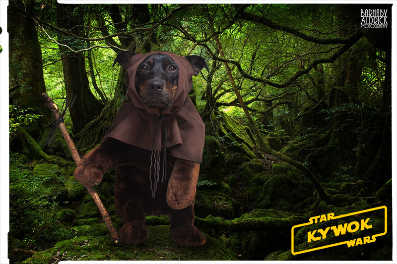 Ewok Star Wars Dog Fancy Dress, Star Wars Pet Costume