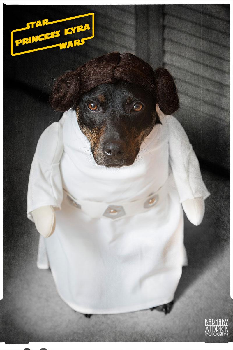 Princess Leia Star Wars Dog Fancy Dress, Star Wars Pet Costume