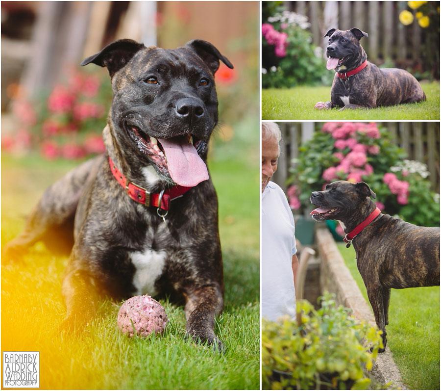 Yorkshire Rose Dog Rescue 002.jpg