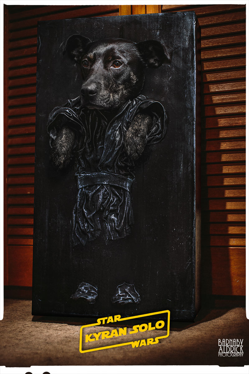 Han Solo Carbonite Star Wars Dog Costume,