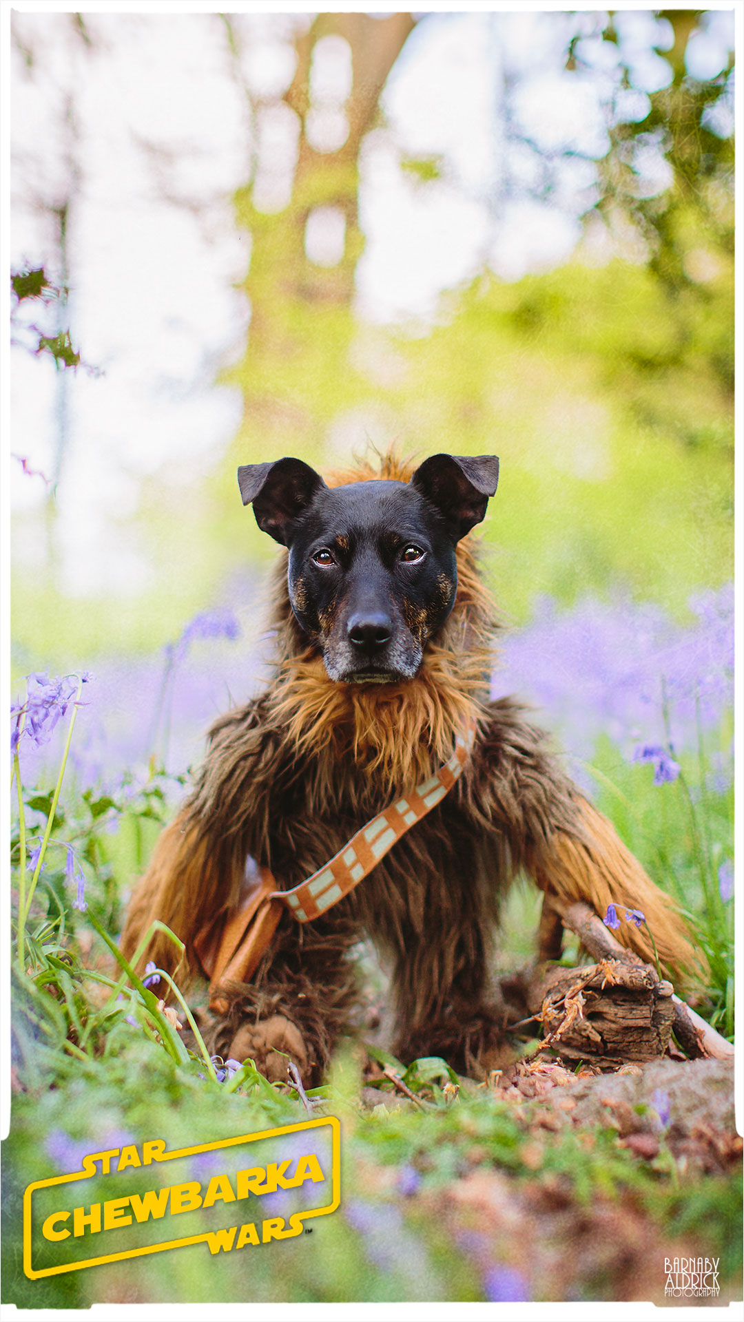 Star Wars Chewbacca Dog Pet Costume, Star Wars Dog Outfit, Star Wars Chewie costume, Star wars Chewbacca pet outfit