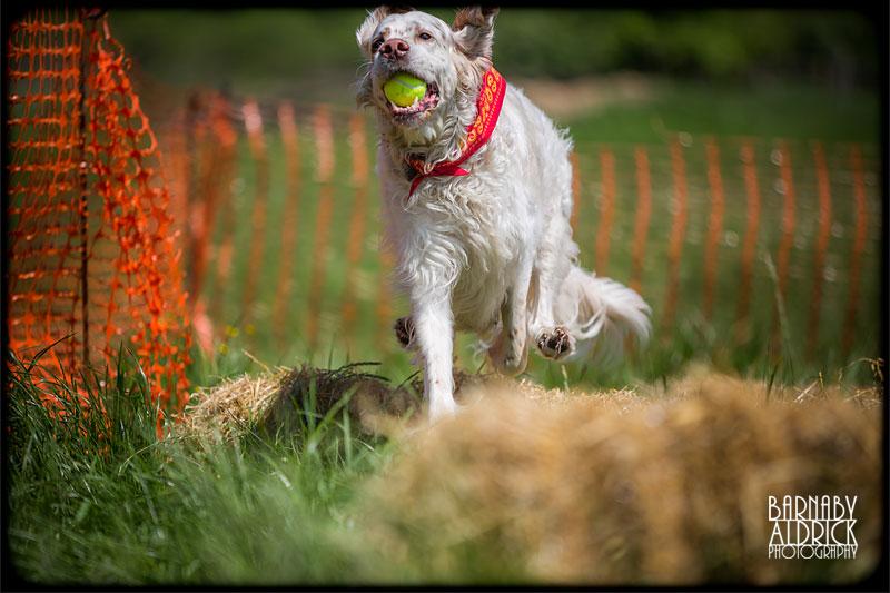 Torkshire Rose Dog Rescue