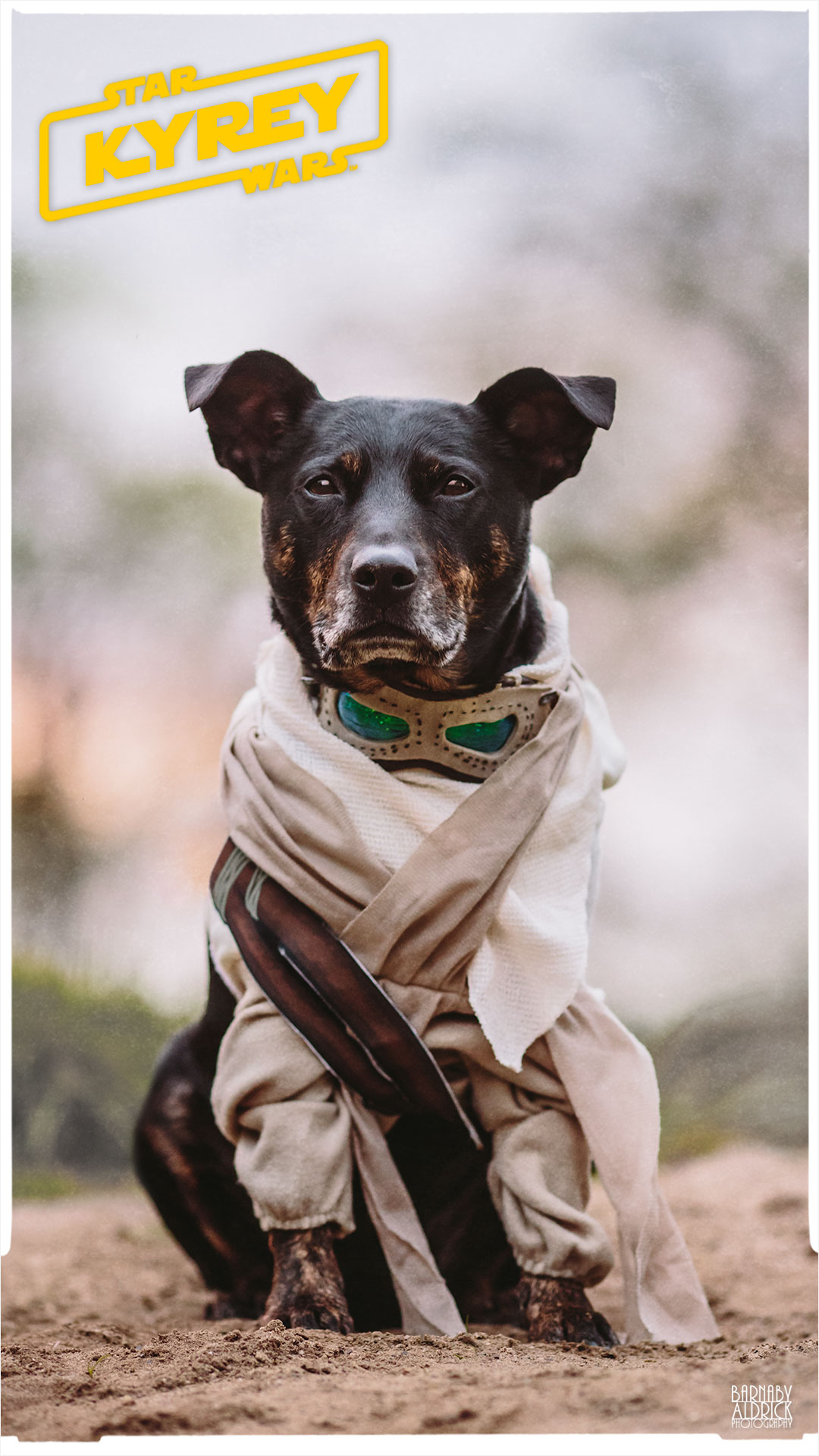 Star Wars Rey Pet Costume, Star Wars Dog idea, Star Wars Ray dog costume, Star wars Rey pet outfit, Star Wars Ray Pet Costume