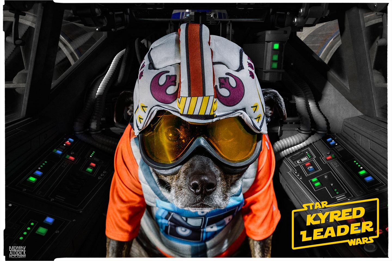 Star Wars Ewok Dog Costume, Star Wars Ewok Costume, Star Wars Ewok Dog Costume, Star Wars Pet Costume